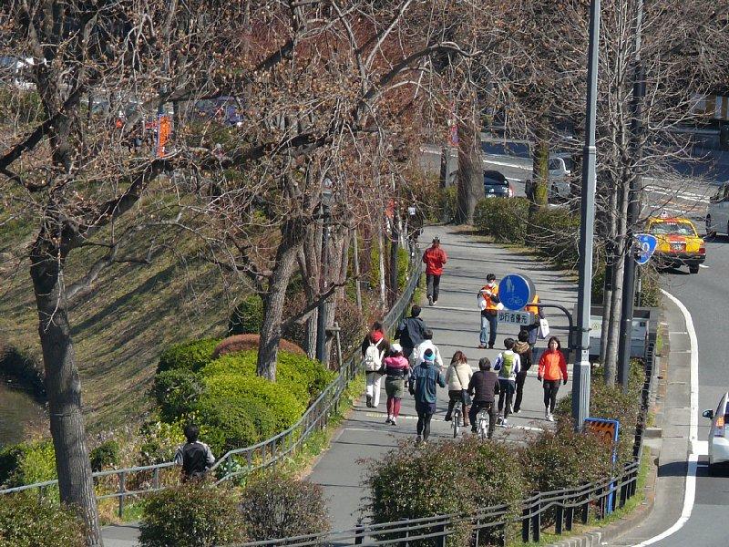 国会前庭公園のヤマザクラ・カンザクラ