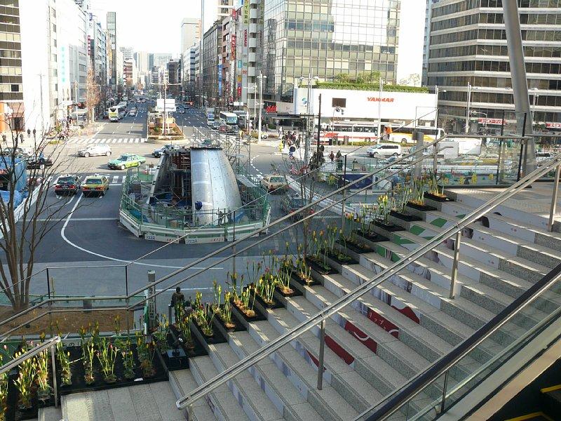 東京を彩る新潟のチューリップ