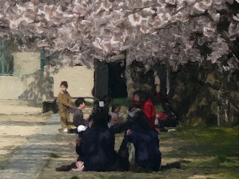 新潟市内の桜 (その1)
